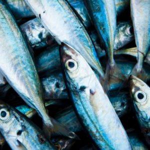 鱼油和必需脂肪酸