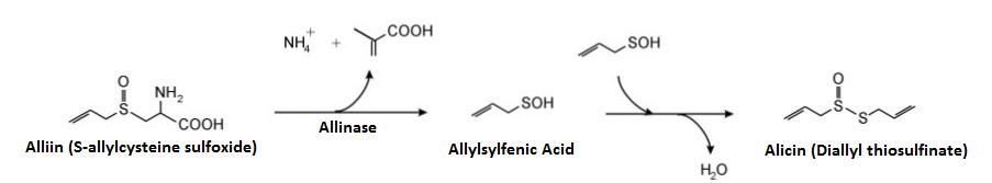 allicin